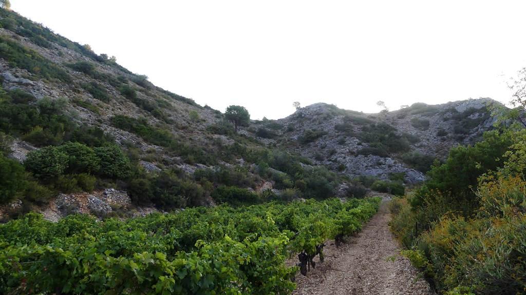 Domaine Pons-Gralet à Estagel